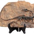 XINDAM Resin Dinosaur Fossil Statue Model Simulated Skeleton Home Office Display Decorative Craft Box Decoration (Style 1)